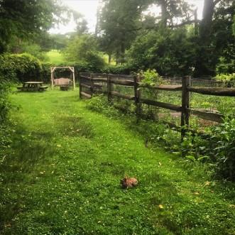 Princeton Garden Project June 2015