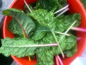 The Chard Harvest! - Morgan Nelson, Photo
